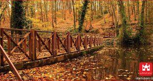 جنگل ایالتی سلطان چیفتلی استانبول